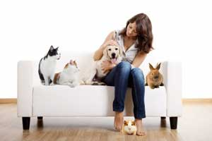 pet-sitter-ipswich-cats-dogs-rabbits-guinea-pigs